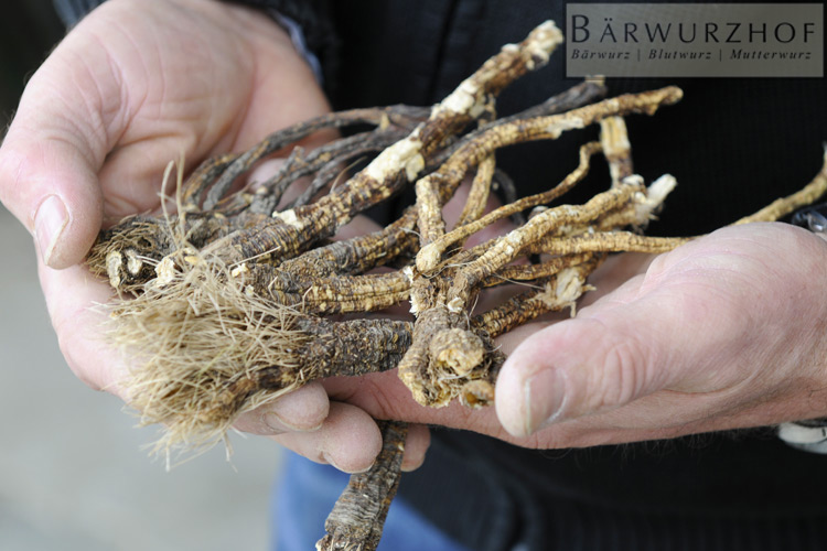 dried roots